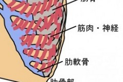 肋骨部イラスト名前入り-300x232
